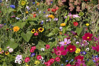 Artenvielfalt im eigenen Garten